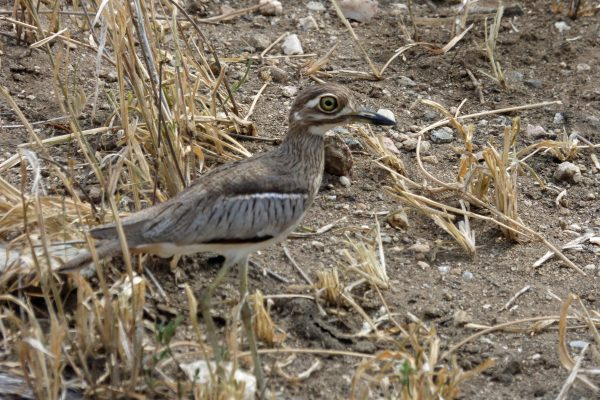 A Water-Thick Knee. Photo by Rebecca Redshaw