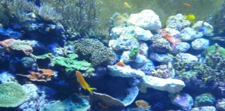 "Tennessee Aquarium, coral reef in ""Boneless Beauties"" section. Photo by Michael Schuman"