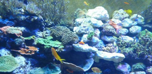 Chattanooga: A Visit to the Tennessee Aquarium