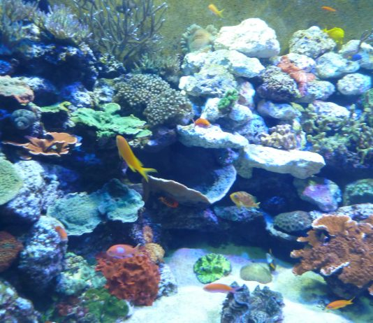 """Tennessee Aquarium, coral reef in """"Boneless Beauties"""" section. Photo by Michael Schuman"""