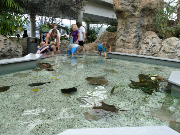 Tennessee Aquarium touch tank with stingrays. Photo by Michael Schuman