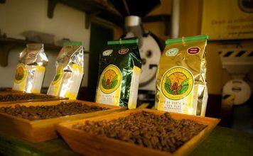 Coffee estate in Costa Rica