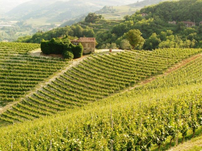Cheese, Truffles, History and Wine in Piedmont, Italy
