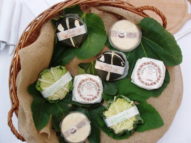 Piedmont Wrapped cheeses. Photo by Victor Block