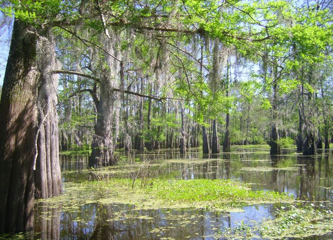 Just 45 minutes from New Orleans, Louisiana's Cajun Country is a world apart. Photo by Janna Graber