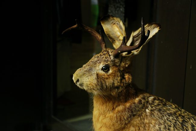 A rendition of a Wolpertinger. Photo by Flickr/Elke Kemna