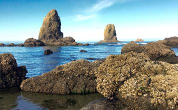 Barnacled rocks at Cannon Beach ©Laurel Kallenbach