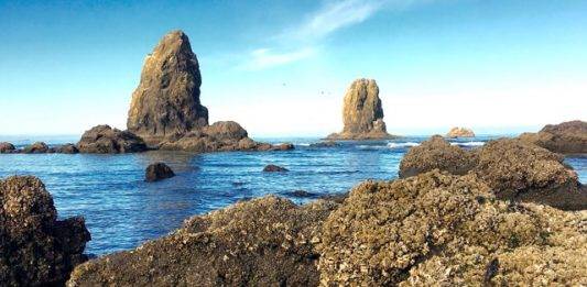 8 Ways to Enjoy a Perfect Day at Oregon's Cannon Beach