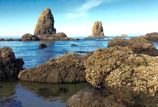 8 Things To Do In Cannon Beach Oregon Beaches Pacific Northwest