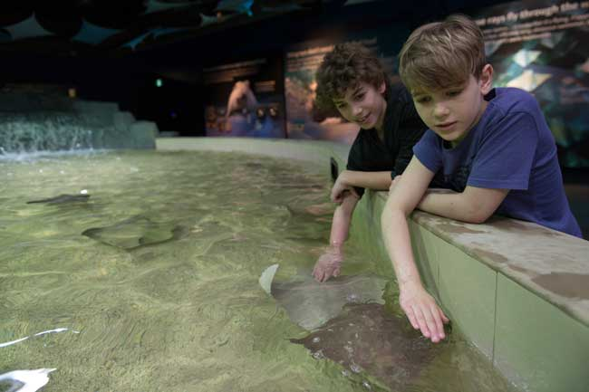 Top 7 Things to Do with Kids in Vancouver - Vancouver Aquarium