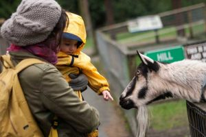Family Fun in Vancouver: 7 Top Things to Do with Kids