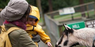 Kids can experience farm animals up close at Maplewood Farm in Vancouver, British Columbia. Flickr/peter pelisek