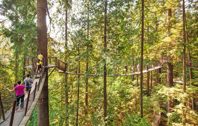 The Treetop Adventure takes visitors along the treetops in a West Coast rainforest at Capilano Suspension Bridge ParkCredit: Tourism Vancouver/ Capilano Suspension Bridge Park