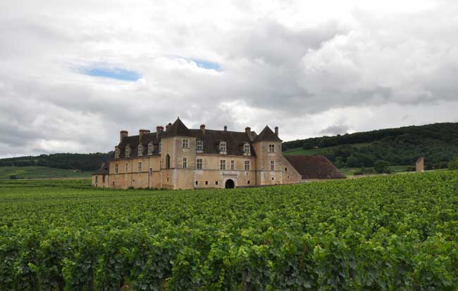 The beautiful vineyards in the Burgundy region. Photo by David Powell