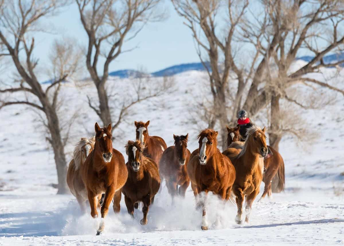 Christmas in Colorado