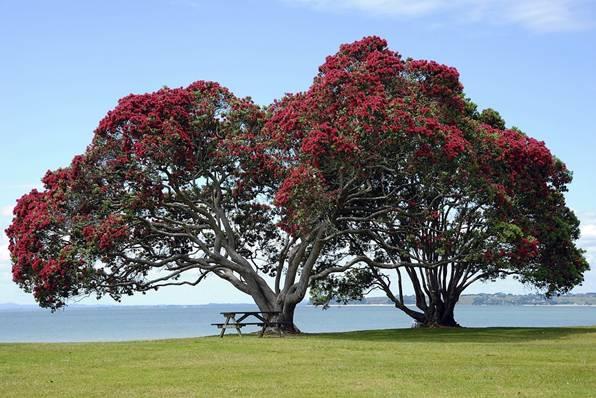6 Top Road Trips in New Zealand