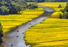 Travel in Vietnam. Rowing through the rice fields of Tam Cốc. Flickr/Tuấn Mai