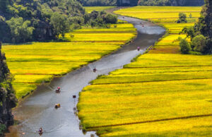 Rowing Through Rice Fields in Vietnam