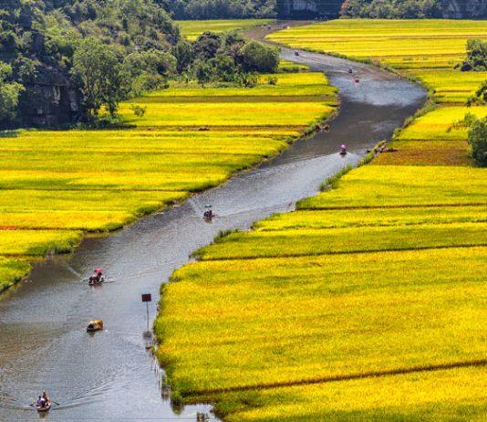 Travel in Vietnam. Rowing through the rice fields of Tam Cốc. Flickr/Tuấn Mai