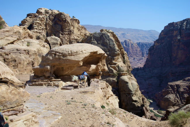 Petra A donkey at the top of the steps. Photo by Christine Loomis