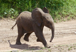 Photo Essay:  Elephants at the Pool & Other Tales of the Serengeti