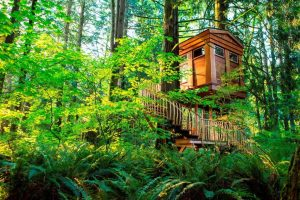 10 Unusual Hotels in the USA: From Submarines to Treehouses