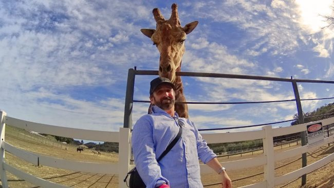 Wine Tasting and Giraffe Feeding in Malibu