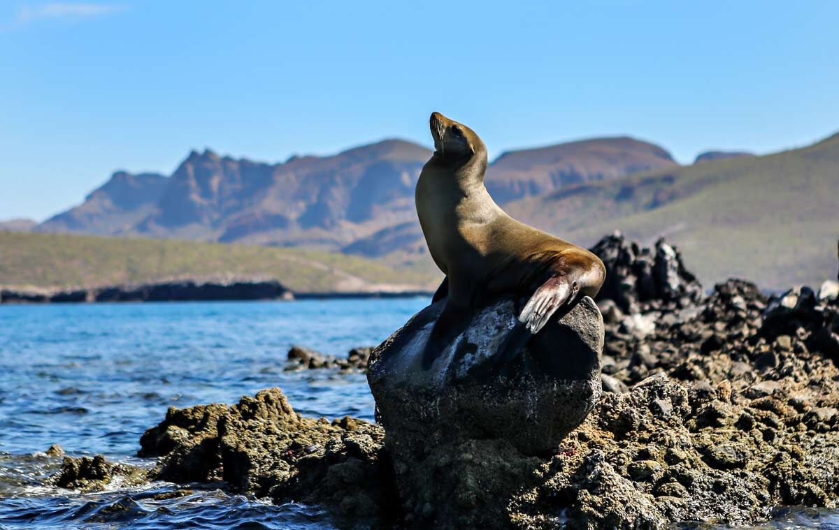 Snorkeling with Sea Lions in the Sea of Cortez: Adventure Travel in Mexico