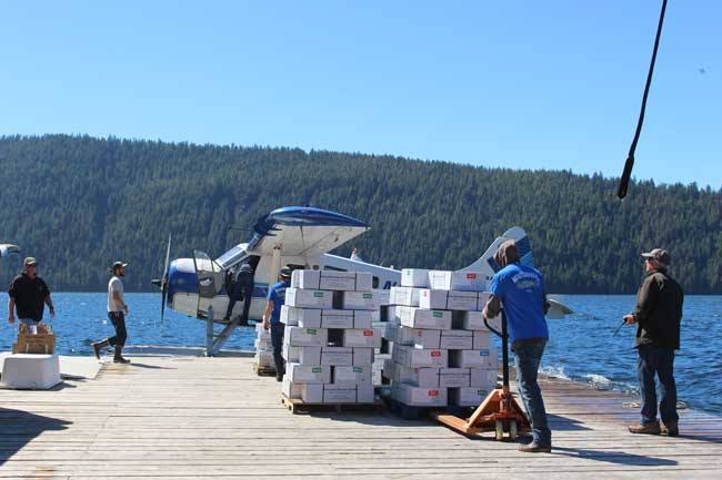 Loading up boxes of fish for the trip home. Photo by Janna Graber