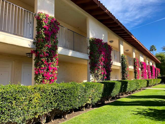 Bougainvillea plants crawl up walls of guest room buildings. Photo by Claudia Carbone