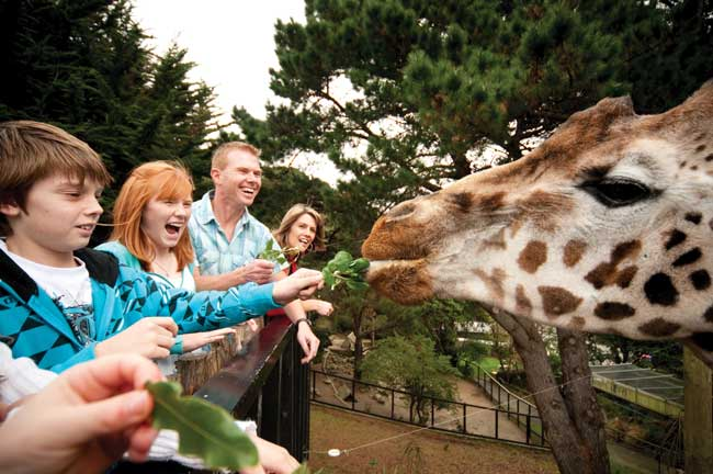 Feeding the giraffes at the Wellington Zoo.