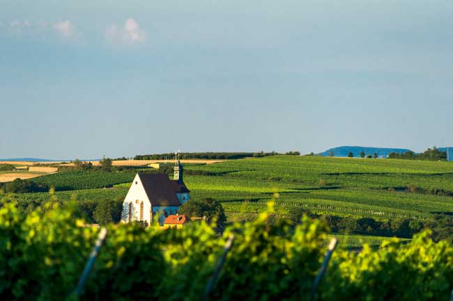 Wine making is a huge part of life in Franconia. Photo by Fränkisches Weinland Tourismus/Andreas Hub