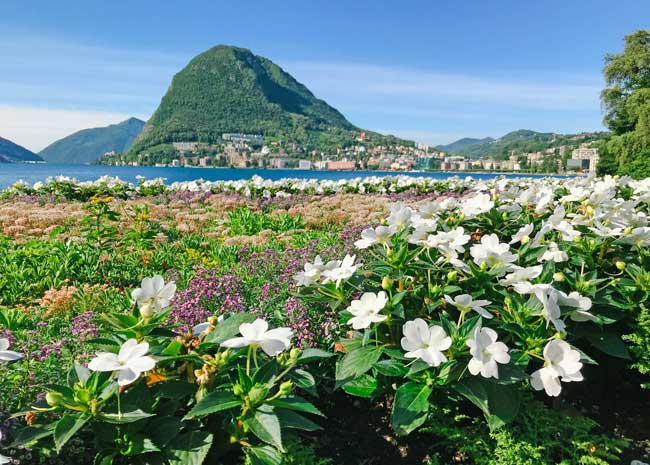 Flowers bloom in the Belvedere Garden in Lugano. Lugano is in the Italian-speaking region of Switzerland. Photo by Jamie Siebrase