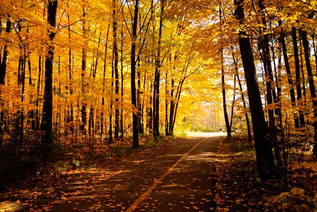 Where to see fall foliage in Vermont