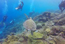 Best dive sites