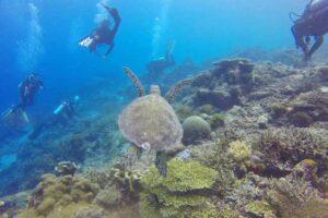Scuba Diving Bucket List: 5 Top Diving Destinations