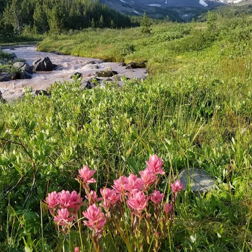 Alpine flowers on the Chilcotin Plateau. Photo by Linda Ballou