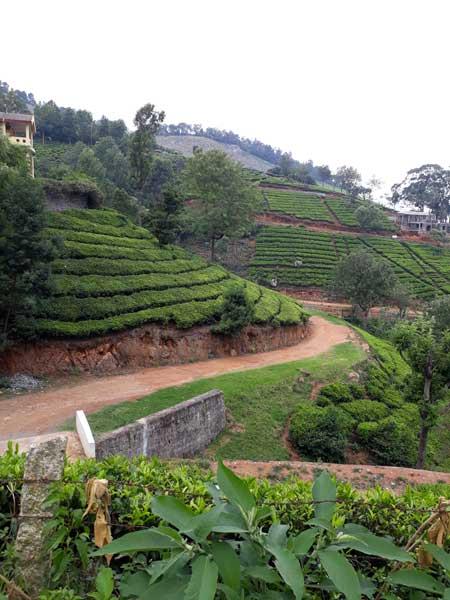 Nilgiri Hills, Tamil Nadu