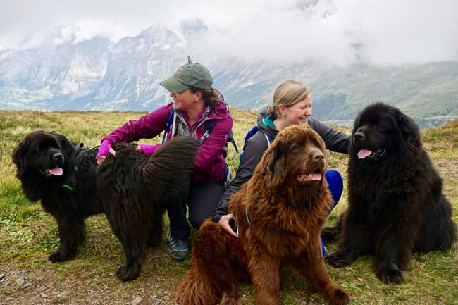 A visit with some friendly dogs in the Swiss Alps