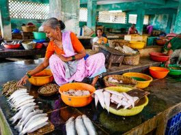 Visiting a fish market in South India