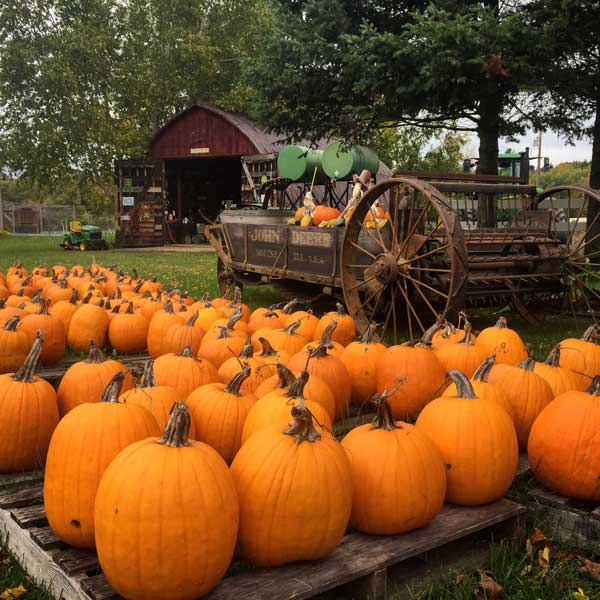 Pumpkin farm on the Tunnel of Trees in North Michigan. Photo by Rich Grant