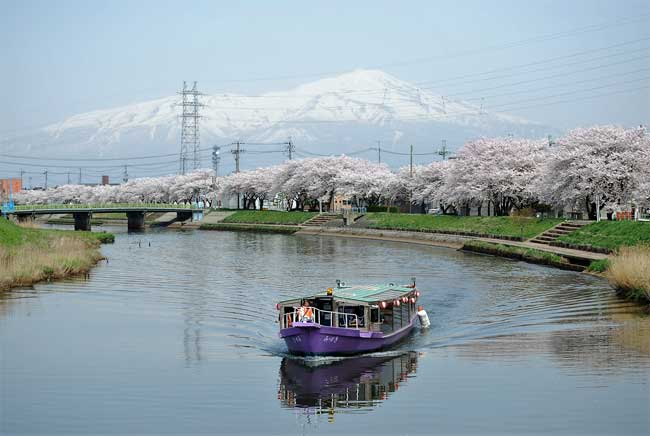 Shonai celebrates the cherry blossom season in mid-April rather than late March, giving visitors an opportunity to view them much later.