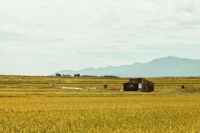 Shonai is a famous rice producing region known for both its long tradition of farming