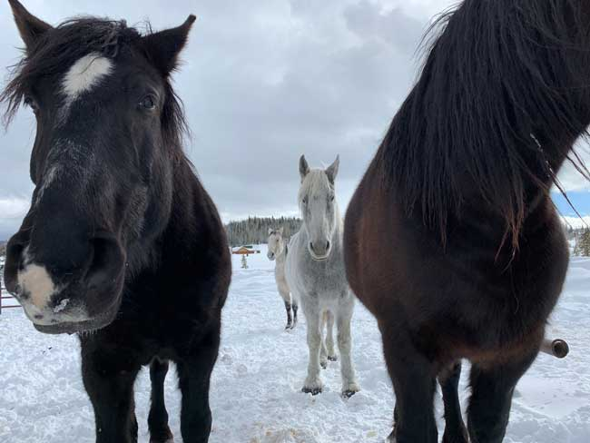 Curious horses at Hahn's Peak Roadhouse near Steamboat Springs. Photo by Janna Graber