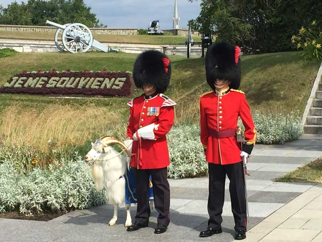 Batisse the goat is the mascot of the Royal 22nd in Quebec. Photo by Rich Grant