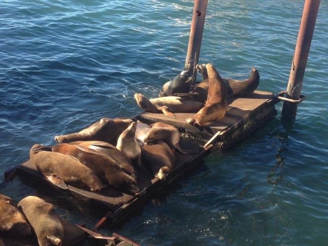 sea lions- Newport- oregon- bayfront- traveling through the US to Mexico