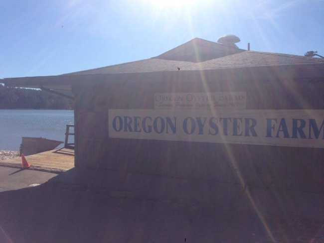 oregon oyster farm- yaquina bay- newport- traveling to mexico