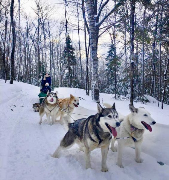 Dog sledding is a fun way to experience winter in Quebec.