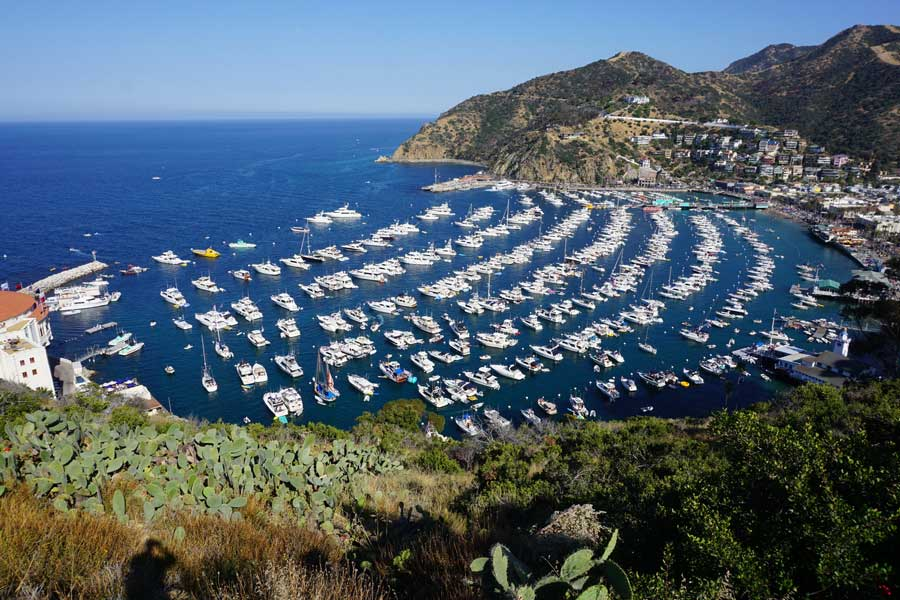 California Outdoors: Hiking on Catalina Island