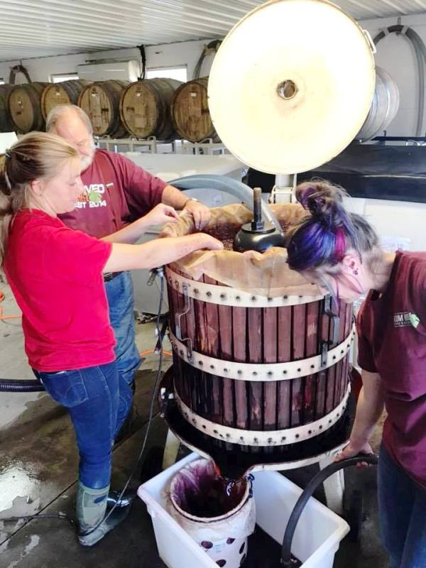 Pressing grapes at Plum Hill Winery in Tualatin Valley, Oregon Photo by Victor Block